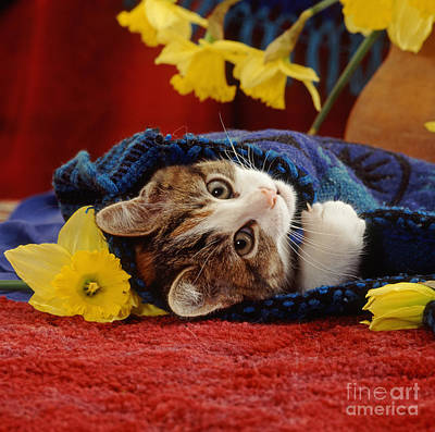 Photograph - Snuggle With Daffodils by Warren Photographic