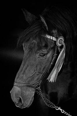 Photograph - So Black  by Alice Gipson