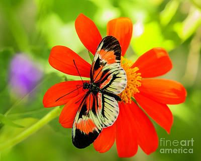 Photograph - So Delicate And So Pretty by Sabrina L Ryan