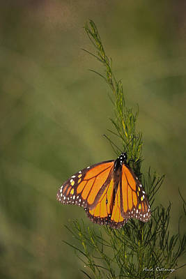 Photograph - So Far To Go Monarch Butterfly by Reid Callaway