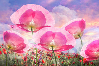 Photograph - So Pretty In Pink by Debra and Dave Vanderlaan