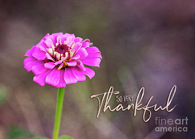 Photograph - So Very Thankful by Mechala Matthews