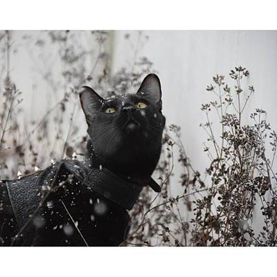 Steampunk Photograph - So We Got This Wet White Stuff Called by Sirius Black Adventure Cat