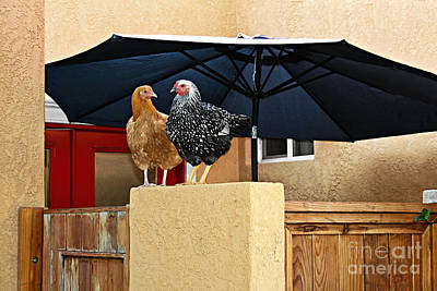 Photograph - So - Why Did The Chicken Cross The Street by Gabriele Pomykaj