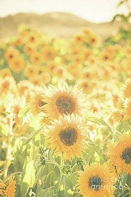 Fields Of Flowers Photograph - Soak Up The Sun by Ana V Ramirez