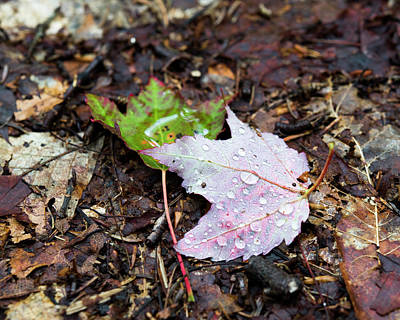 Soaken Leaves Art Print