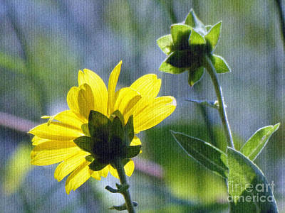 Photograph - Soaking Up The Sun by Sue Melvin