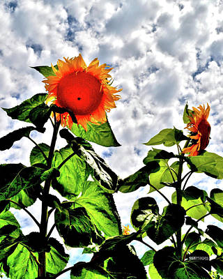 Photograph - Soaking Up The Sun by Susie Loechler