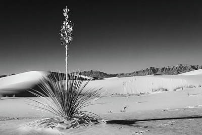Photograph - Soaptree Yucca by Larry Pollock