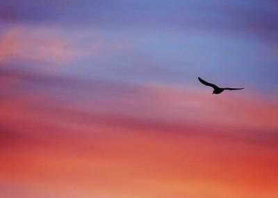Photograph - Soar Against The Sunrise by Vicki Jauron
