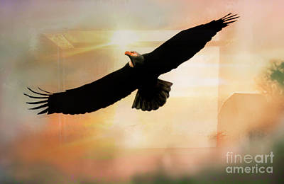 Photograph - Soar High And Free by Janie Johnson