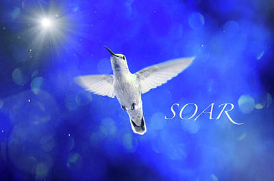 Photograph - Soar by Lynn Bauer