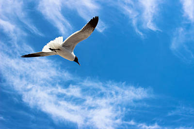 Photograph - Soar - Seagull by Colleen Kammerer