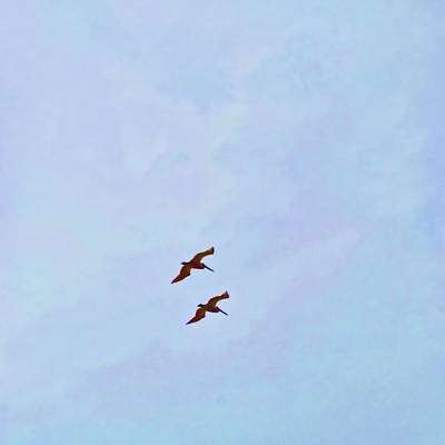 Photograph - Soaring Pelicans by JAMART Photography