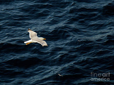 Photograph - Soaring Above The Deep Blue Sea by Sue Melvin