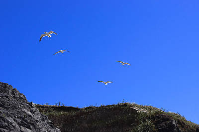 Photograph - Soaring by Adria Trail