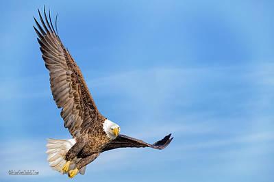 Photograph - Soaring American Bald Eagle by LeeAnn McLaneGoetz McLaneGoetzStudioLLCcom