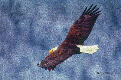 Photograph - Soaring Bald Eagle by Mark Miller