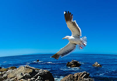 Photograph - Soaring Bird by Harry Spitz