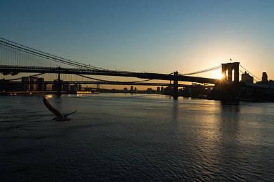 Photograph - Soaring - Brooklyn Bridge Sunrise With A Seagull by Georgia Mizuleva