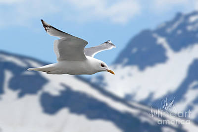 Linda King Digital Art - Soaring Seagull by Linda King