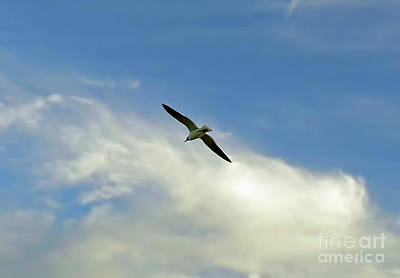 Photograph - Soaring by D Hackett