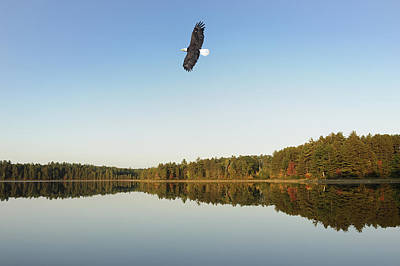 Eagle In Flight Photograph - Soaring Eagle by Christian Heeb