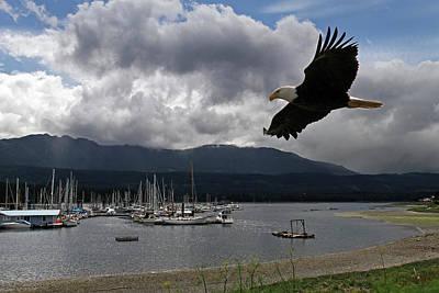 Photograph - Soaring Eagle by Inge Riis McDonald