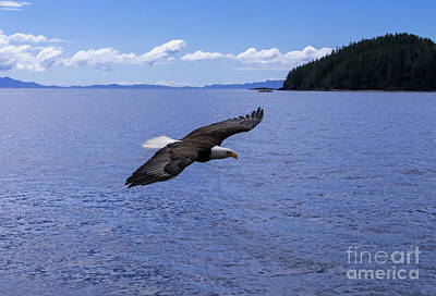 Photograph - Soaring Eagle by Louise Magno
