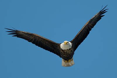 Photograph - Soaring Eagle by Steve Stuller