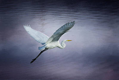 Photograph - Soaring Egret by Morgan Wright