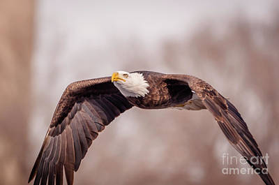 Photograph - Soaring Gracefully by Jean Hutchison