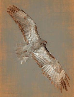 Soaring Hawk  Art Print by Chris LeBoutillier