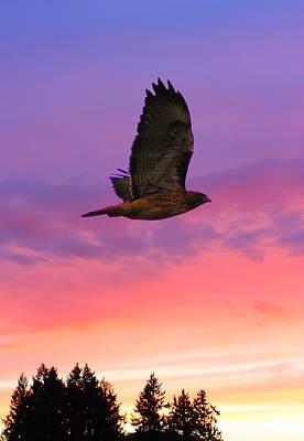 Hawk Digital Art - Soaring Hawk by Nick Gustafson