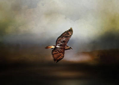 Red Tail Hawk Digital Art - Soaring High by TnBackroadsPhotos