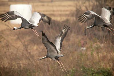 Birds In Winter Photograph - Soaring by Hyuntae Kim