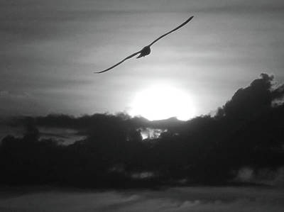Photograph - Soaring Into The Sunset by Jenny Regan