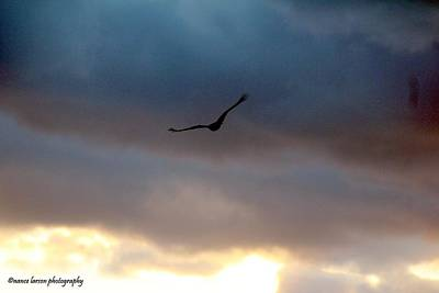Photograph - Soaring  by Nance Larson