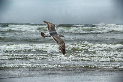 Photograph - Soaring On Long Island by Marie Leslie