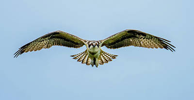 Photograph - Soaring Osprey Eyes by Jerry Cahill
