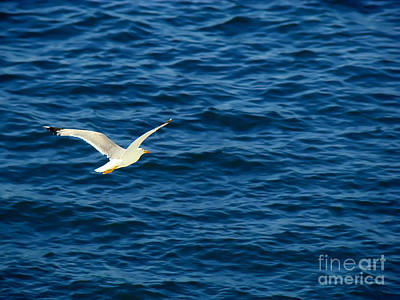 Photograph - Soaring Over The Mediterranean by Sue Melvin