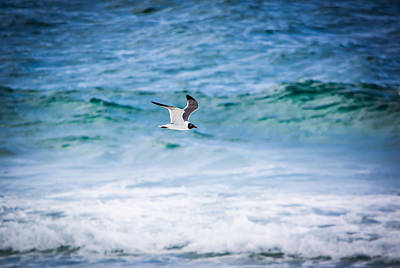 Ocean Photograph - Soaring Over The Ocean by Shelby Young