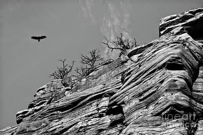 Photograph - Soaring by Patrick M Lynch