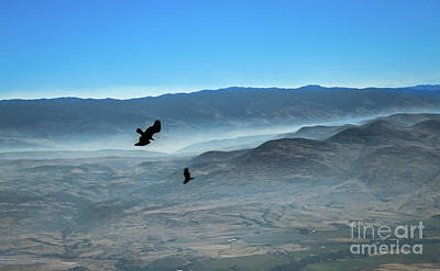 Photograph - Soaring Ravens by Robert Bales