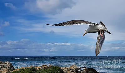 Photograph - Soaring Seagull  by Gina Savage