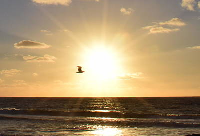 Photograph - Soaring Seagull Sunset Over Imperial Beach by Karen J Shine