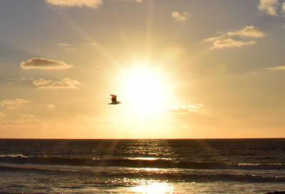 Soaring Seagull Sunset Over Imperial Beach Art Print by Karen J Shine