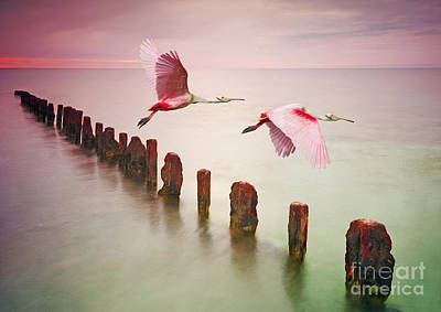 Spoonbill Wall Art - Photograph - Soaring Spoonbills by Laura D Young