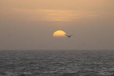 Photograph - Soaring Through Sunrise by Robert Banach