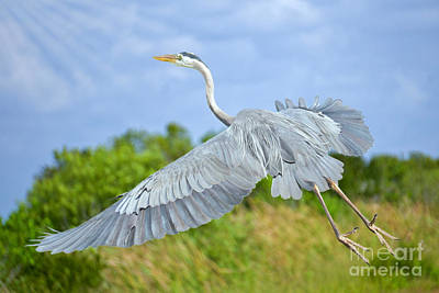 Photograph - Soaring Upward by Judy Kay